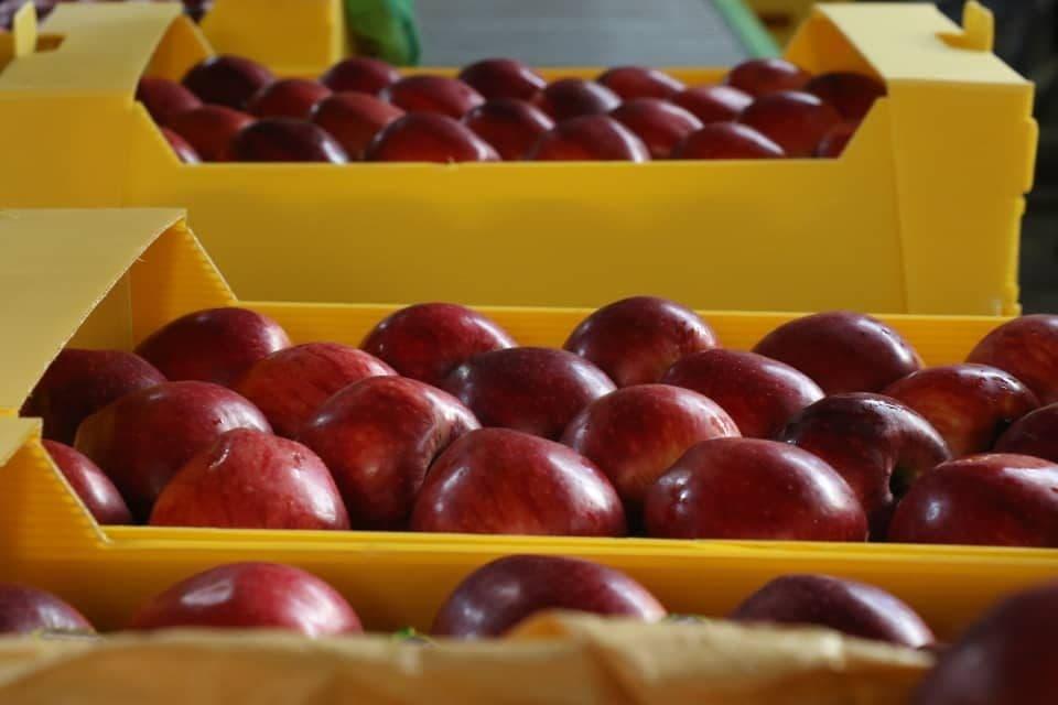 سرمایهگذاری خارجی برای راهاندازی بزرگترین واحد سورتینگ سیب کشور در اورمیه